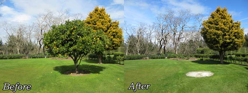 We Don T Just Remove Large Trees In Difficult Places Also Cut Down And Small Shrubs Hedges There Are No Too Or